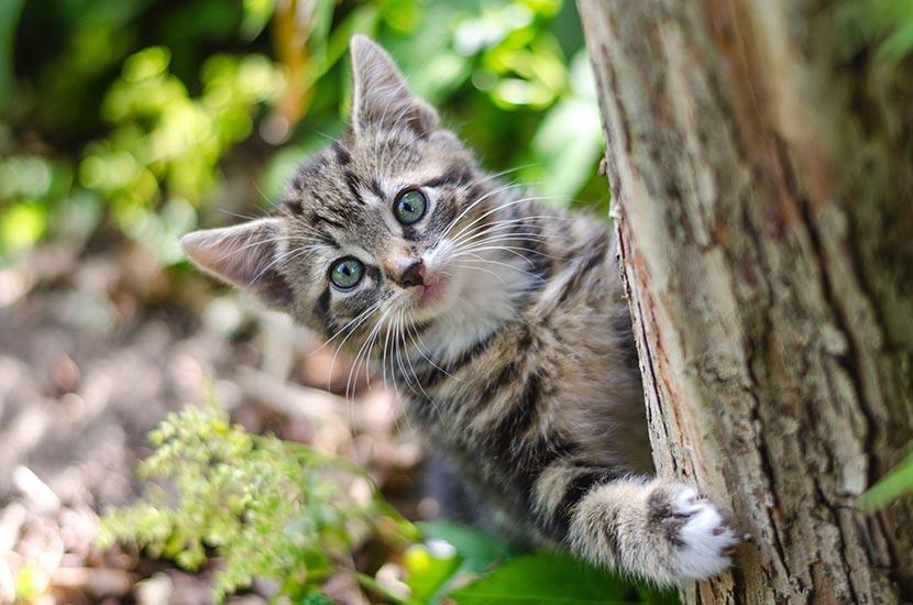 Skateboard Cat – Focus!